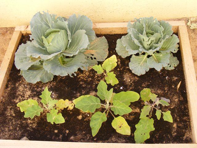 CAULIFLOWER and aubergine