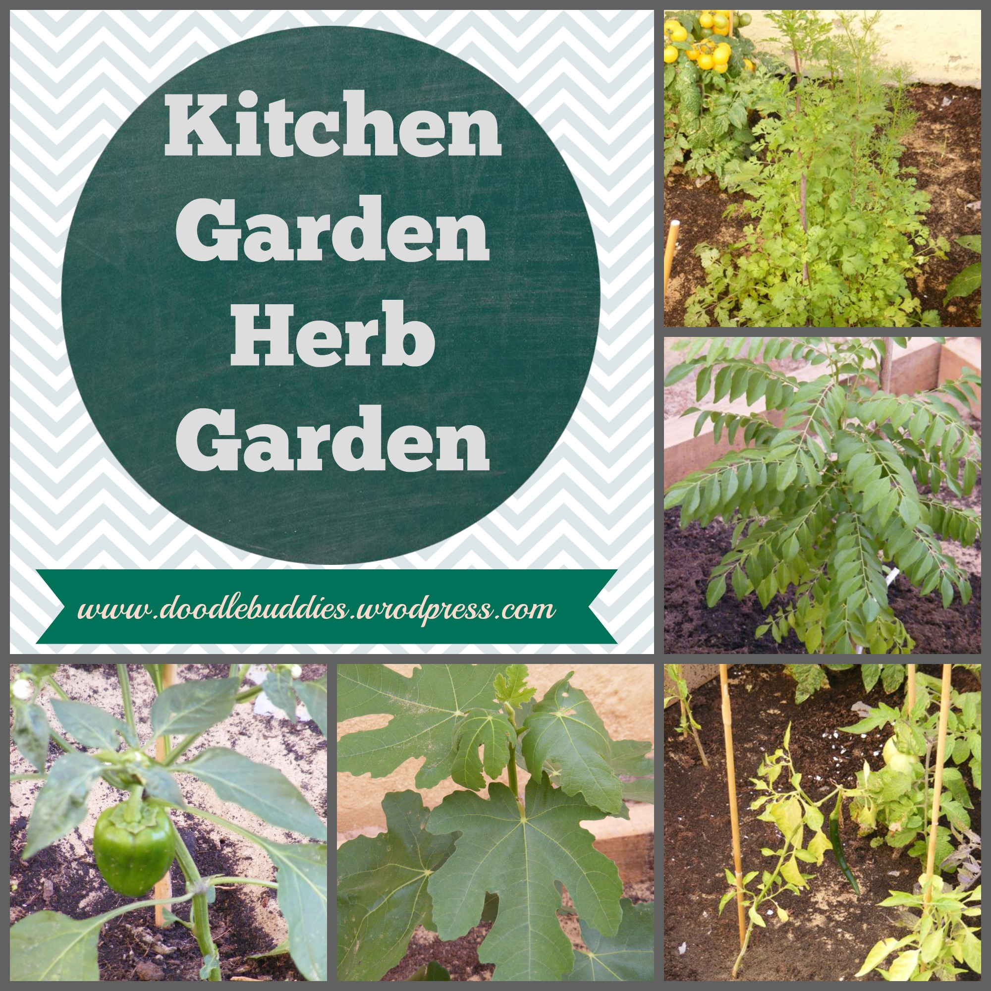Kitchen garden a k a herb garden for Kitchen herb garden
