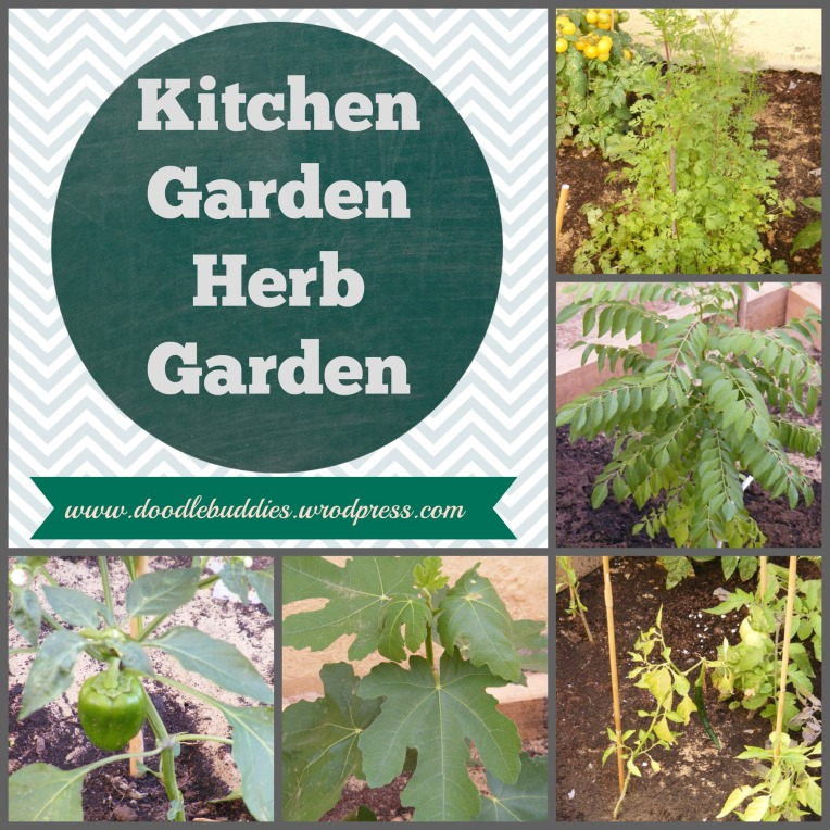 Kitchen Garden A K A Herb Garden