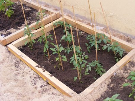 tomatoes and chillis